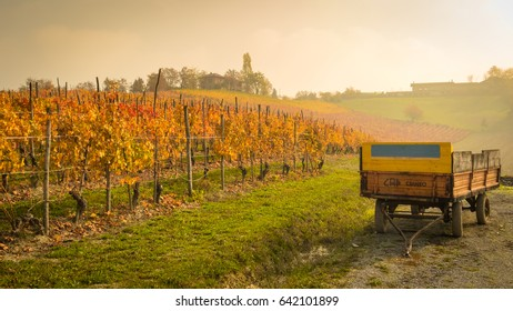 Wineyards in the fog