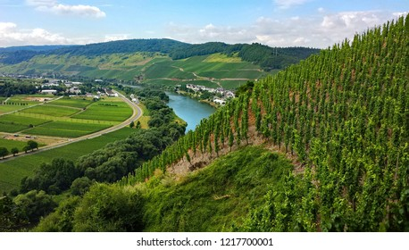 At the wineyards near Urzig, Rhineland-Palatinate, Germany