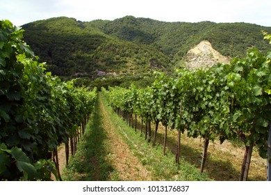 Wineyards in Wachau
