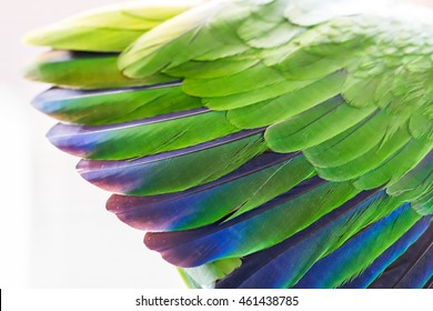 Wing beautiful green parrot background