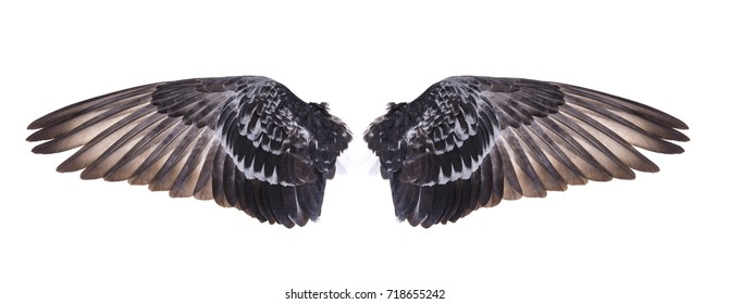 wing of bird
