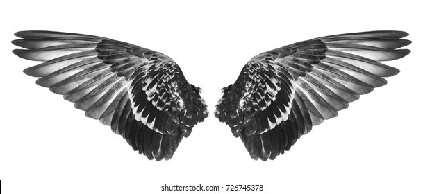 wing of bird
