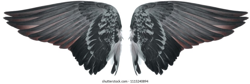 Wing of bird isolated on white background