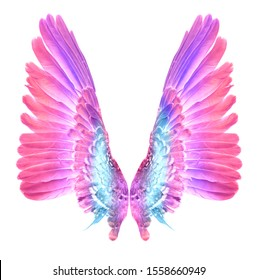 Wing bird isolated on white background