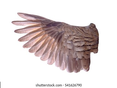 wing of bird on white background