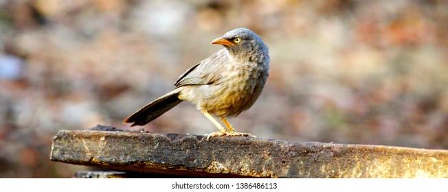 Birds Wallpaper Download Images Stock Photos Vectors Shutterstock