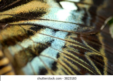 wing close-up of a butterfly