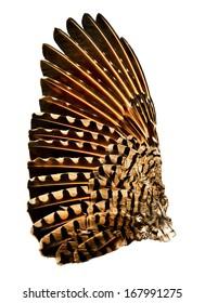 Wing of a flicker bird/Full wing of a flicker bird