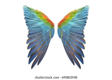 wing of macaw isolated on white background