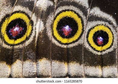 Wing of a tropical butterfly, beautiful texture, macro shot