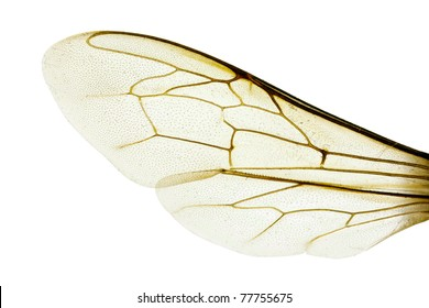 bee wings images  stock photos   vectors shutterstock Forest Animals Clip Art Easter Black and White Bee Clip Art Vector