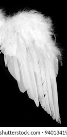Wing from white feather