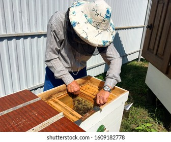 Winged bee slowly flies to beekeeper collect nectar on private apiary from live flowers. Apiary consisting of village beekeeper, floret dust on bee legs. Beekeeper for bees on background large apiary.