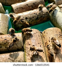 Winged domestic bees flew to watering place, sit on corks from bottle wine to drink water. Bees sip water on private home apiary in bottle cork of wine. Wine cork from bottles help bees eat water.