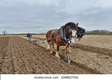 Wingfield, UK - April 4, 2015: Draught horses pull a plough through a field. Horses were traditionally used in ploughing before the large scale mechanisation of farming during industralisation.
