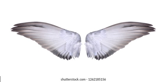 wings of bird on white background