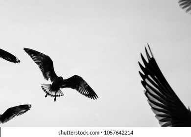 Wings and birds flying Silhouette concept