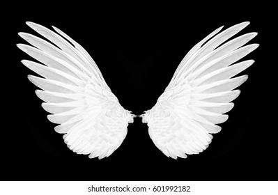 wings of birds on back bacground,white
