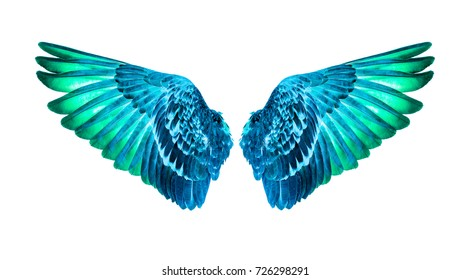 wings of birds on white background,green wings