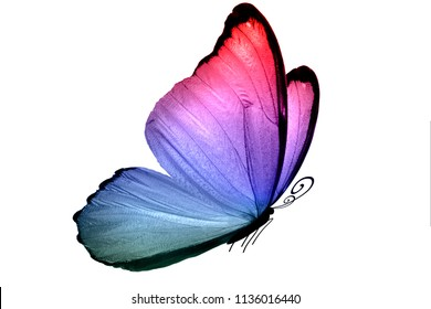 wings of a blue butterfly isolated on a white background
