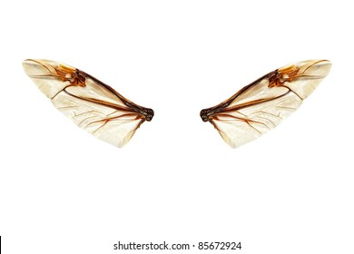 Wings of a bug isolated on a white background