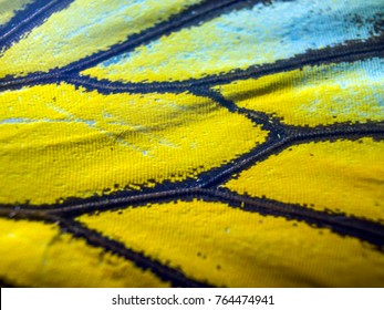 Wings of butterflies at high magnification, Natural texture and background, Macro close up