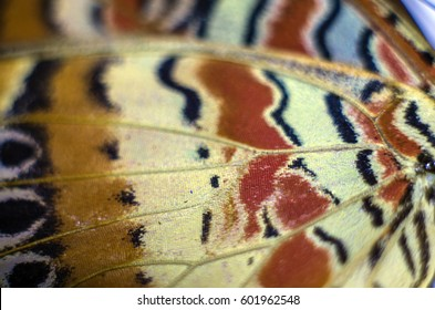 Wings of butterflies at high magnification, Strong approximation, macro, Natural texture and background