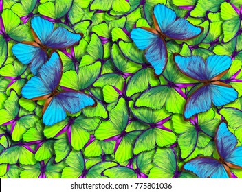 Colourful Butterfly Images Stock Photos Vectors Shutterstock