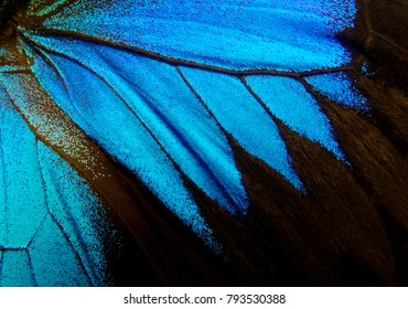 Wings of the butterfly Ulysses. Closeup. Wings of a butterfly texture background.