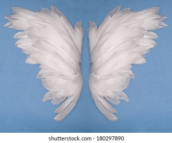 wings feather on blue background
