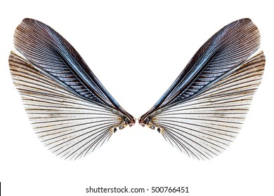 Wings of insect isolated on a white background with clipping path