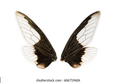 Wings of insect isolated on white background with clipping path