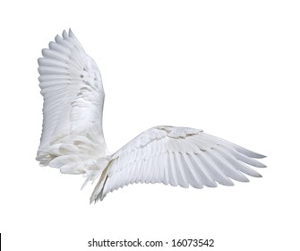 Wings (isolated on white)