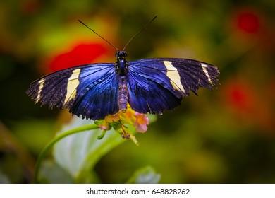 Wings spread open
