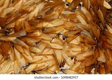 Termite Images Stock Photos Amp Vectors Shutterstock