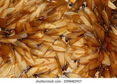 Termite Images Stock Photos Amp Vectors Shutterstock