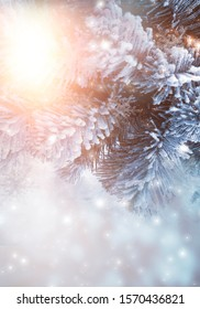 Winter abstract blue background with fir branches in the snow, bokeh, sunlight. Banner blue background.