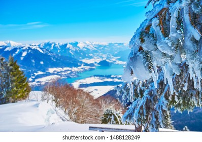 The winter Alpine landscape with a spruce branch, coated with glaze ice, hoarfrost and hanging icicles, Zwolferhorn, St Gilgen, Salzkammergut, Austria