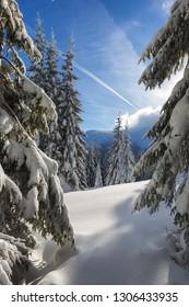 Winter in alpine meadows