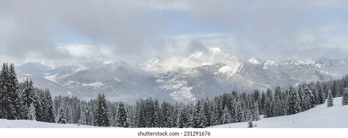 Winter Alpine panorama firs forest with snowfall