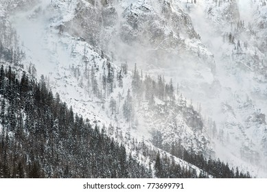 Winter in the Alps, snow, fog and wind on a high mountain peak, bad weather, pine trees on the slopes