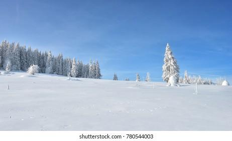 Winter in the Apuseni Mountains - Transylvania