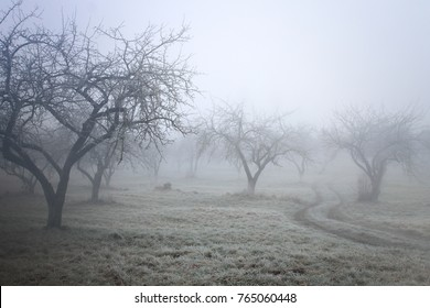 winter / autumn background /  foggy frozen garden