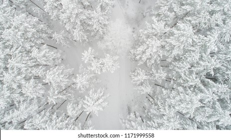 Winter background. Christmas nature. White forest covered with snow view from above. Winter forest aerial view.