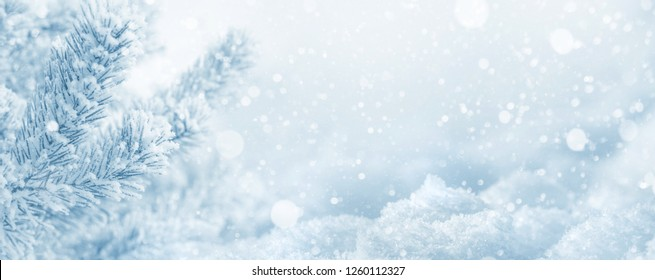 Winter  background. Christmas background with snow-covered pine branch and snowdrifts
