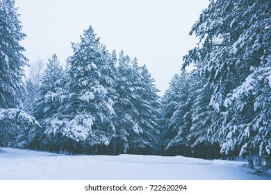 Winter background, Winter Outdoor Scene, Happy New Year and Merry Christmas