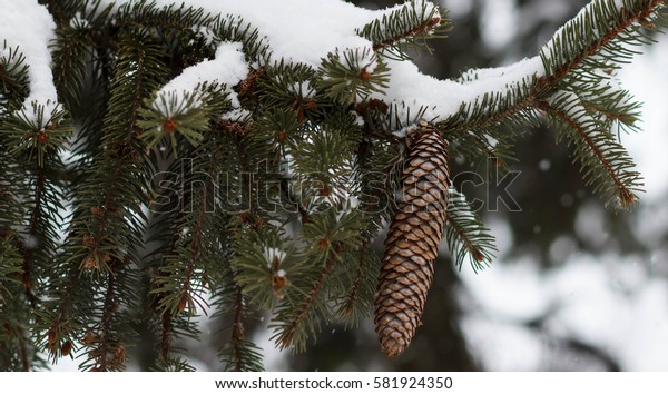 Winter background with pine cones