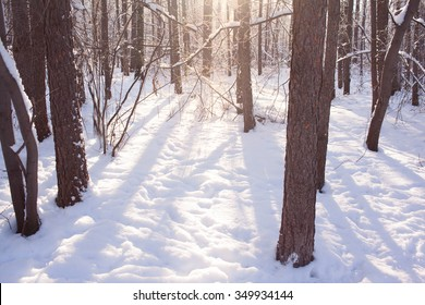 winter background of snowy forest, sprays of light shining through tree branches