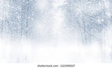 Winter background with snowy trees in the forest