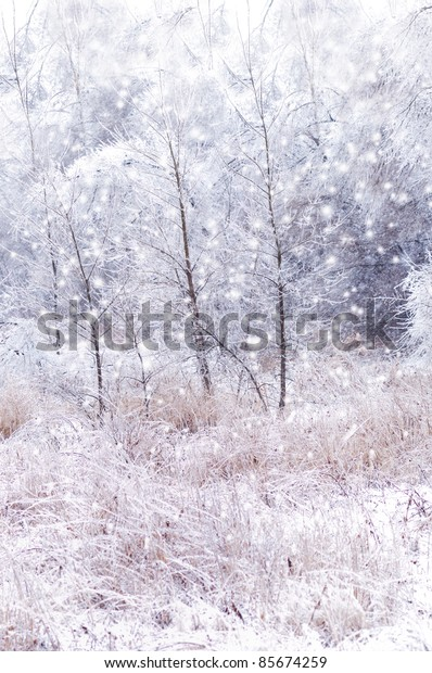 winter background with trees and snow